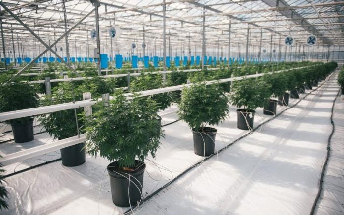 Canada's largest cannabis producer is doubling in size