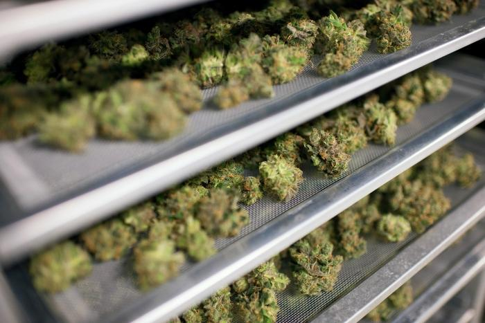 Nuuvera breaks ground on medical cannabis packaging facility in Germany