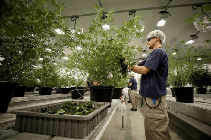 Israel's Together gets Canadian deal for five tonnes of cannabis oil