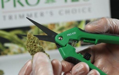 Looking For A Summer Internship? Consider Cannabis