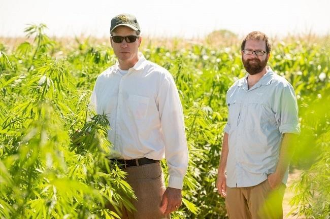 John McKay, CSU associate professor of Bioagricultural Sciences and Pest Management, and Ph.D. student Brian Campbell research industrial hemp. Image: Colorado State University