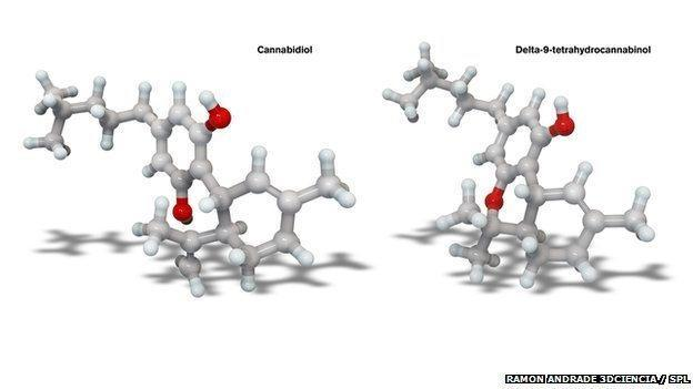 "Images of molecular models of ""real"" cannabis chemicals"