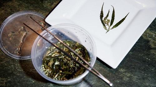 A fine dining chef gave up a restaurant career for marijuana-plant-to-table cuisine – Cannabis News