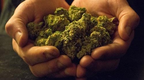 10 Everyday Terms Every Marijuana Newbie Needs To Know - Cannabis News