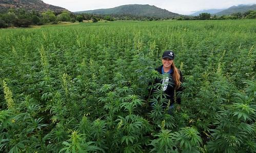 Can Legal Hemp Save Agriculture? - Cannabis News