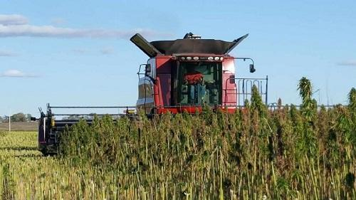A new 'hemp scanner' determines level of THC in cannabis plants - Cannabis News