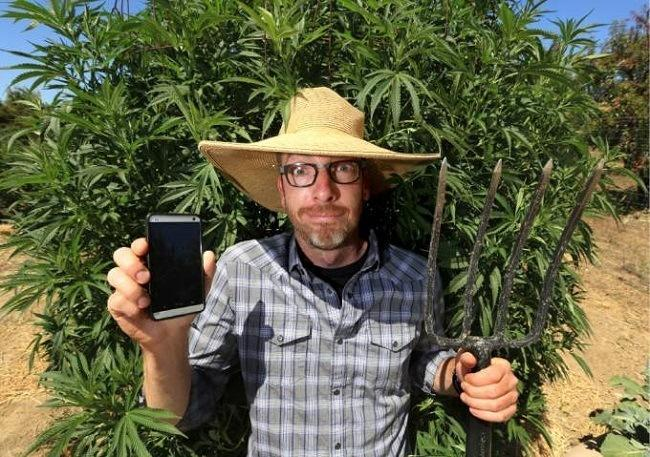 Joshua Artman developed a duo of apps that connect cannabis growers with dispensaries and users. Image: JOHN BURGESS / The Press Democrat
