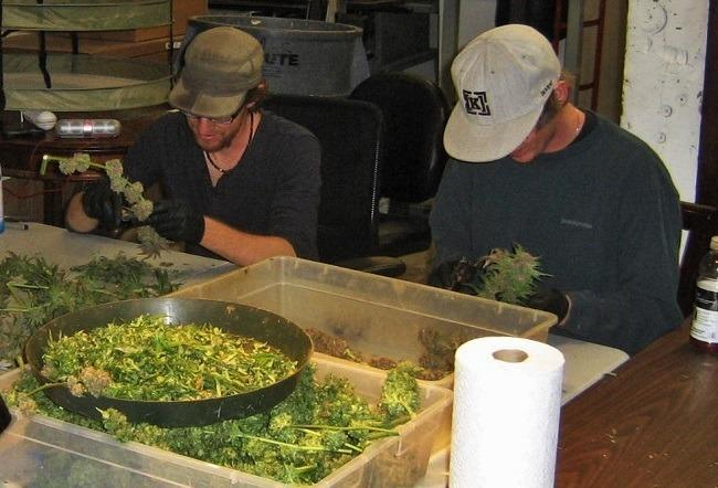 Cannabis trimmers at a Denver operation. Image: WeedWorthy.com
