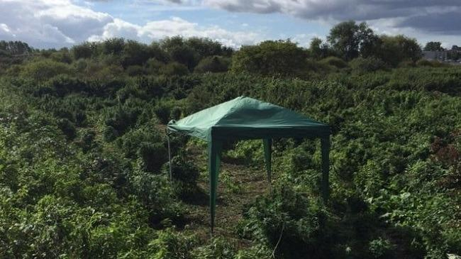 "Officers said the ""small forest"" of plants covered an area the size of a football pitch and was complete with a gazebo. Image: Met Police via BBC News"