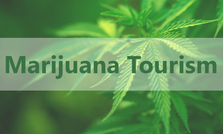 Image of Marijuana Tourism logo
