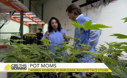 MothersWorkingInMarijuanaBizVideoImageCBSNewsDotCom