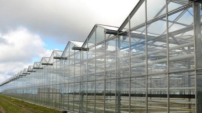 A seven-acre greenhouse facility in Ontario run by Supreme Pharmaceuticals, formerly a copper exploration company.  Image: Reuters/Euan Rocha