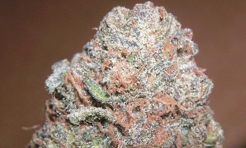 The Science Behind Purple Kush, and the Colors of Cannabis – Cannabis News