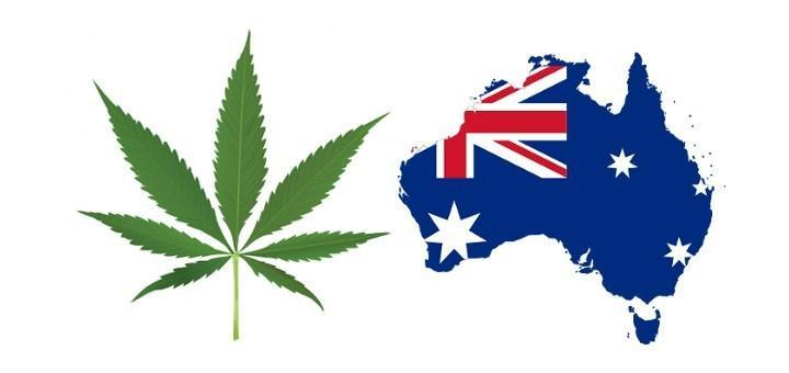Image of Australian Doctors want marijuana logo