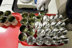 Image of medical marijuana that could be treating PTSD