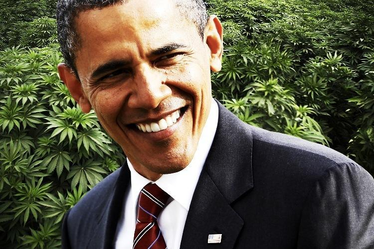 Image of President Obama with marijuana plants in the back ground