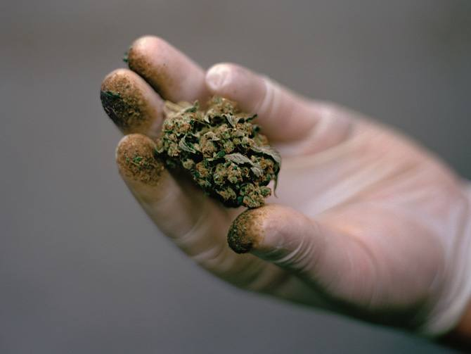 Image of legalized medical marijuana